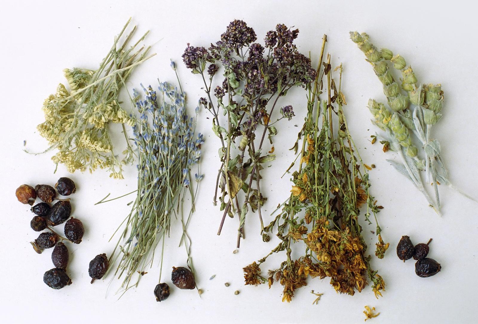 состав трав чая от диабета