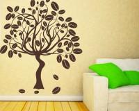 Выращивание кофейного дерева в домашних условиях