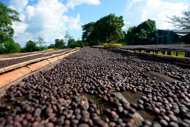 Выращивание и производство кофе