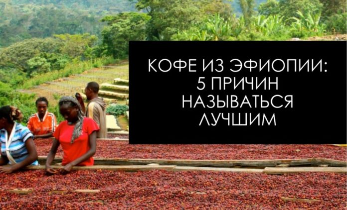 Кофе из Эфиопии - сорт кофе Эфиопия Иргачиф