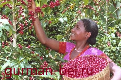 кофе из эфиопии гурман-бель