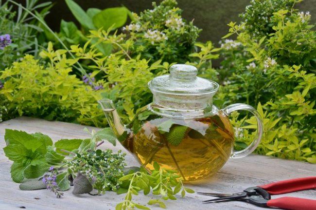 Травяной чай для улучшения пищеварения. Народные рецепты