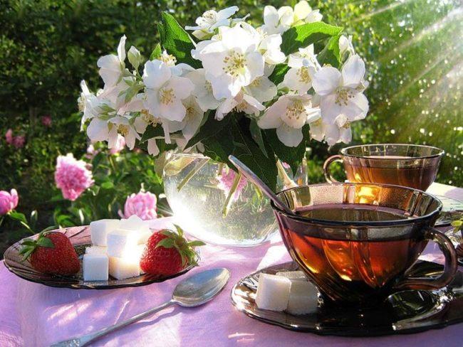 Весенний чай - полезный и бодрящий напиток