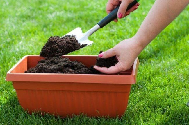 использование кофейной гущи для улучшения текстуры почвы