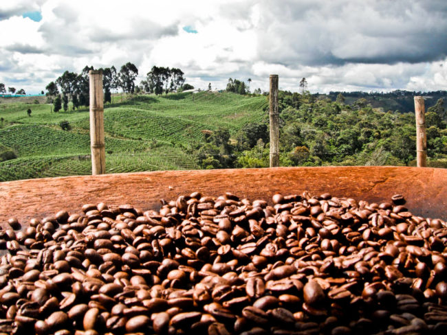 50 видов кофе арабика