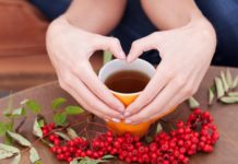 чай из рябины - полезные свойства, для похудения, для женщин, противопоказания