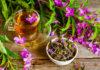 как собирать и сушить иван-чай