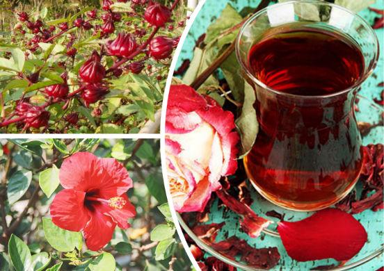 Рецепты чая каркаде