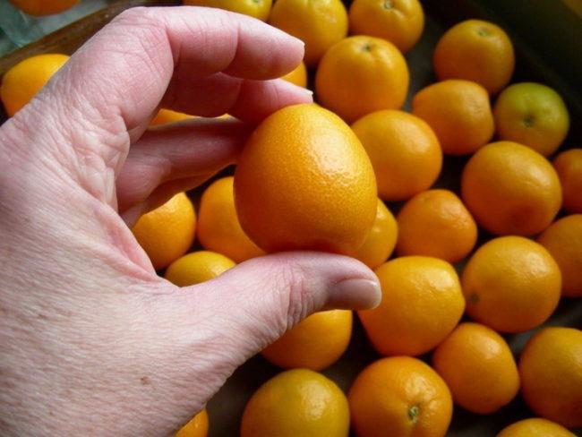 Кумкват - чтоэто за фрукт, чем полезен