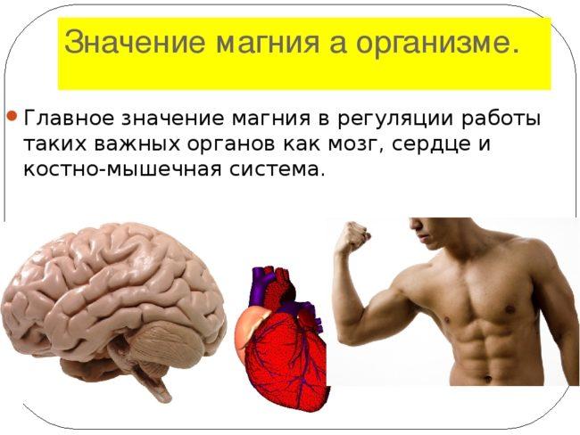 чем магний так важен для организма и здоровья
