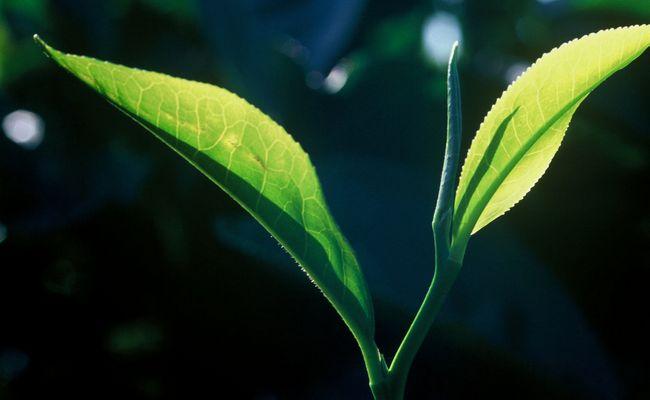 1-tea_leaves