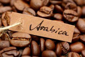 Kava_arabica