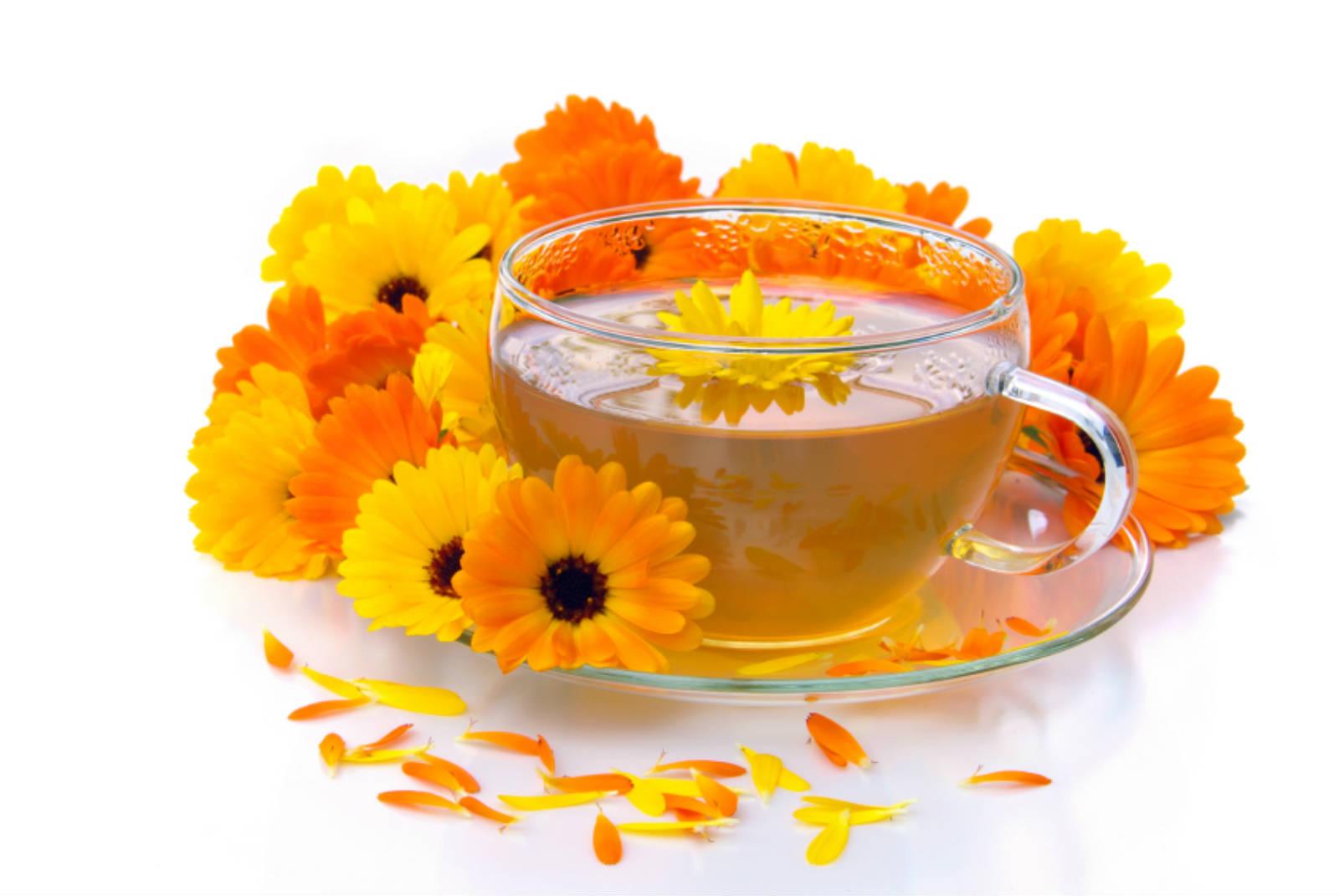 Чай из календулы польза и вред для здоровья
