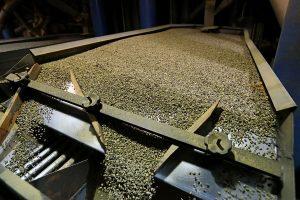 Выращивание и производство кофе 1