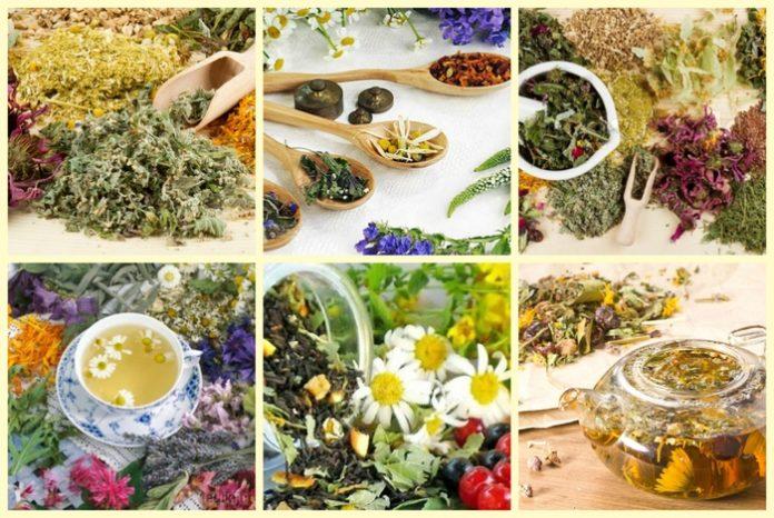Травяной чай. Грудной сбор от кашля у детей
