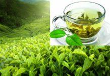 полезные свойства зелёного чая