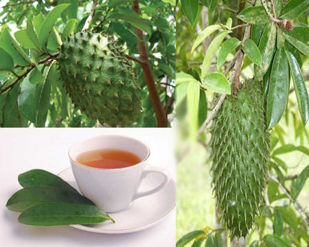 зелёный чай с саусепом - что это за чай: состав, польза и свойства