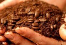 кофейная гуща как удобрение для растений и цветов